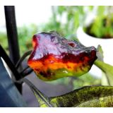 Bhut Neyde Orange/Black